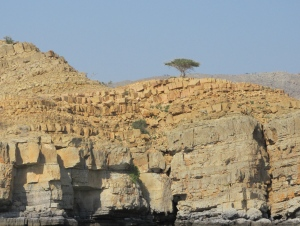 Acacia trees show true grit growing out of the rocks.