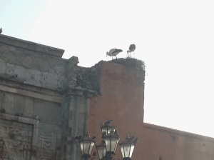 Storks nesting on top of wall gate