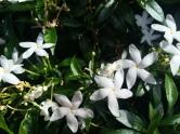 Plumeria everywhere!