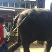 Oh, just an elephant walking on the side of the road.