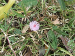 This tiny little fairy flower was dotted among the grass surrounding the stupa